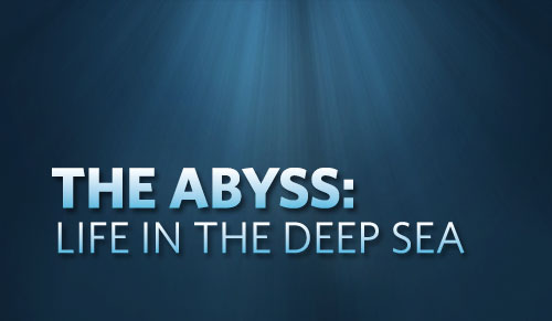 The Abyss: Life in the Deep Sea